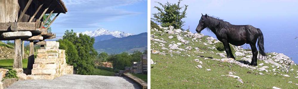 Programas de Inmersio¦ün Lingu¦êi¦üstica en Asturias - 1000x300